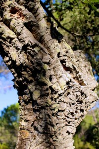 At first sight it looks like any other bark
