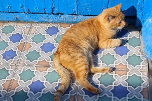 Cats have it easy in the Rabat kasbah