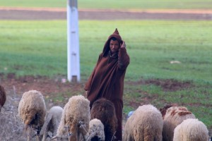 The sheep herder