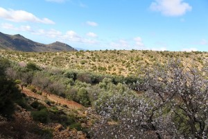 Almond blossom and lavendar make delicous honey in this region