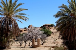 An idyllic watering hole - the well, almond blossom and palm trees make a picture postcard