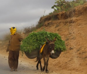 Carrying herbs to market