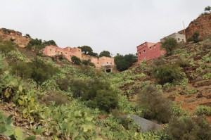More modern Moroccan hillside homes and suculent cacti