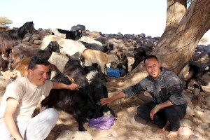 The big shaggy Moroccan goats liked Mohammed's cooking too!JPG