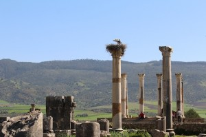 Volubilis storks are the only watchkeeps now