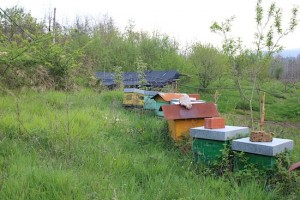 Slow food proponents, including making their own honey
