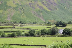 A maze of dry stone walls criss-cross the valley