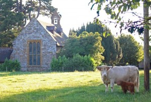 Cow, calf and chapel