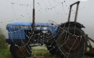 Spiders web and tractor