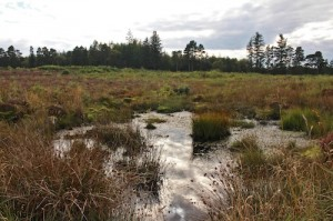 The boggy marshes of Culloden field were the downfall of the Jacobite armies