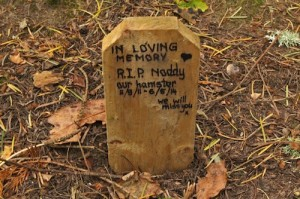 To Noddy - one of the tombstones at the Ness Island pet cemetery