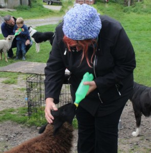 Who wants to feed the baby lambs? Me, Me..oh and that little kid