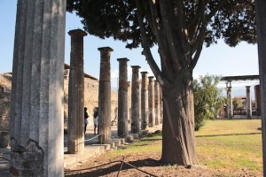Ancient trees and even older columns in Pompeii