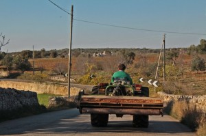 The Murge region of Puglia is still very rural