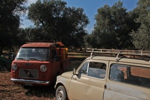 What great old Italian classics to be found in the olive grove