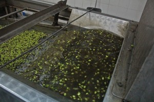 First wash your olives