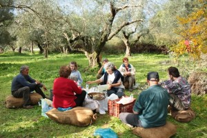 Picnic in the olive grove