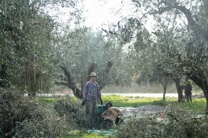 The rain in Greece falls mainly on Koyan!