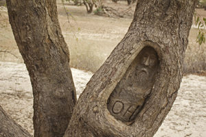 Burke's image was carved into a nearby tree forty years later as a memorial
