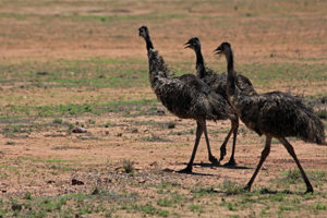 Even the locals look a little frazzled by the heat