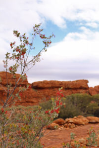 Flowers and berries feed the many birds and animals that live in Kings canyon