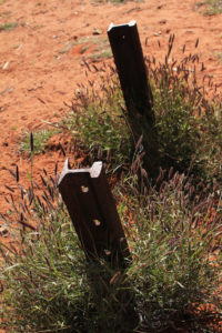 Weed-tangled fence posts are all that's left of the old Ghan railway track