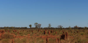 Termite mounds come in many shapes and sizes